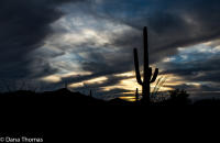 Saguaro sunset, Saguaro National Park